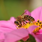 "Are you a ""Bees to the Honeypot"" Kind of Business?"""